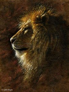 The opening up of the Lion Portal Judith Kusel Wildlife_13