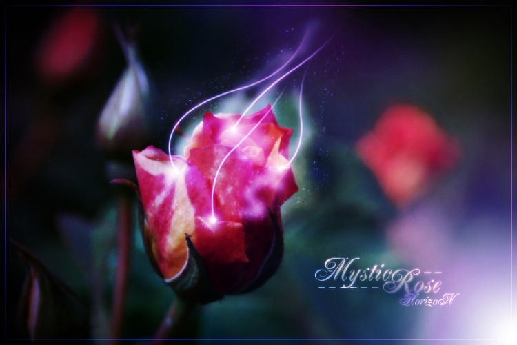 mystic_rose_by_horizonpl